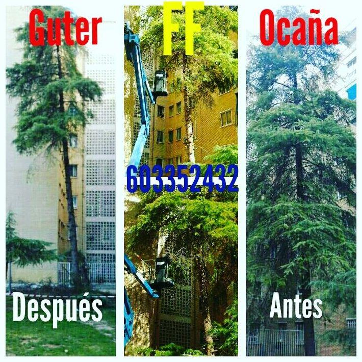 Foto 25 de Diseño y mantenimiento de jardines en Alcalá de Henares | Guter FF Ocaña