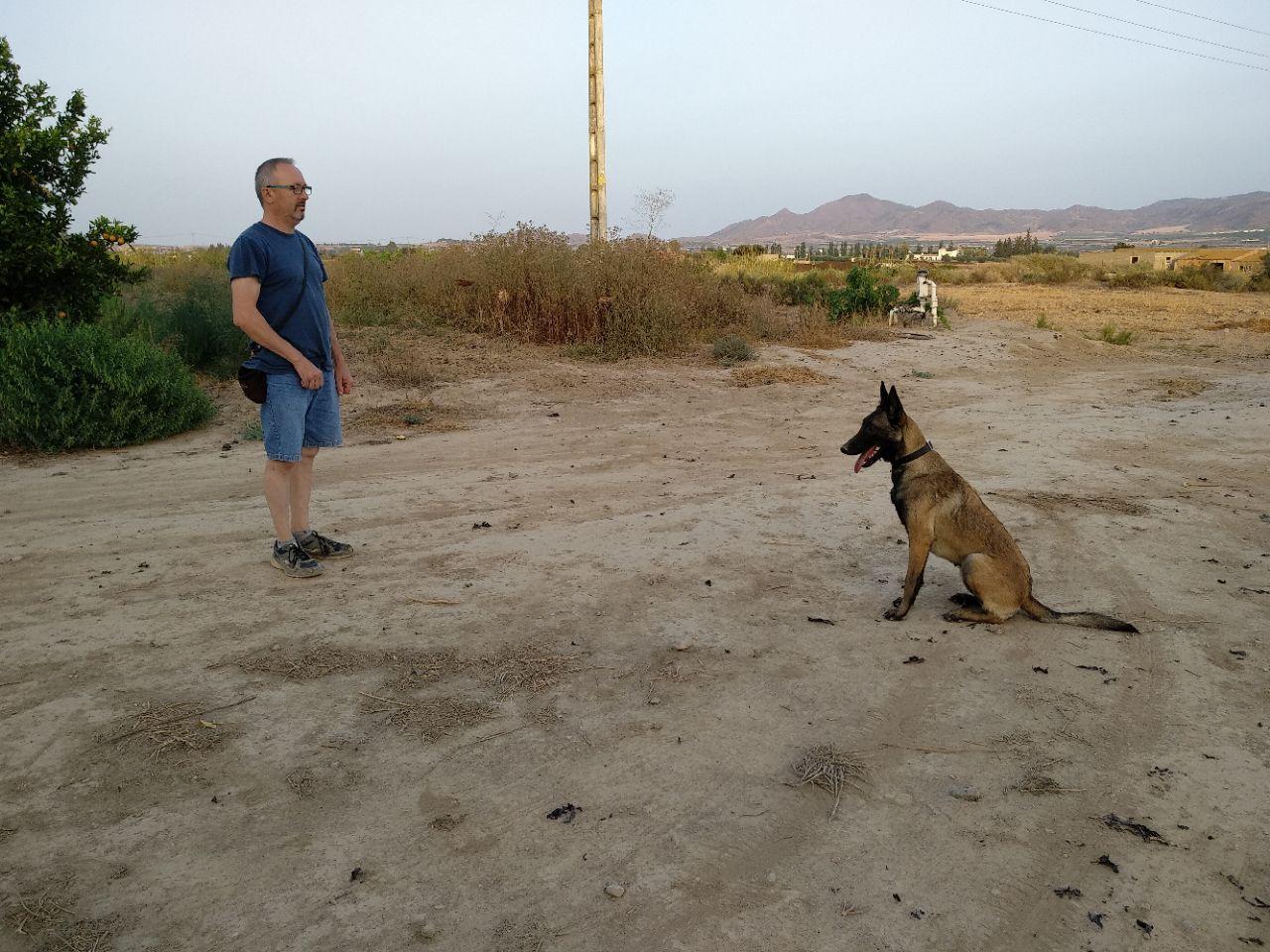 Adiestramiento de perros en Almería