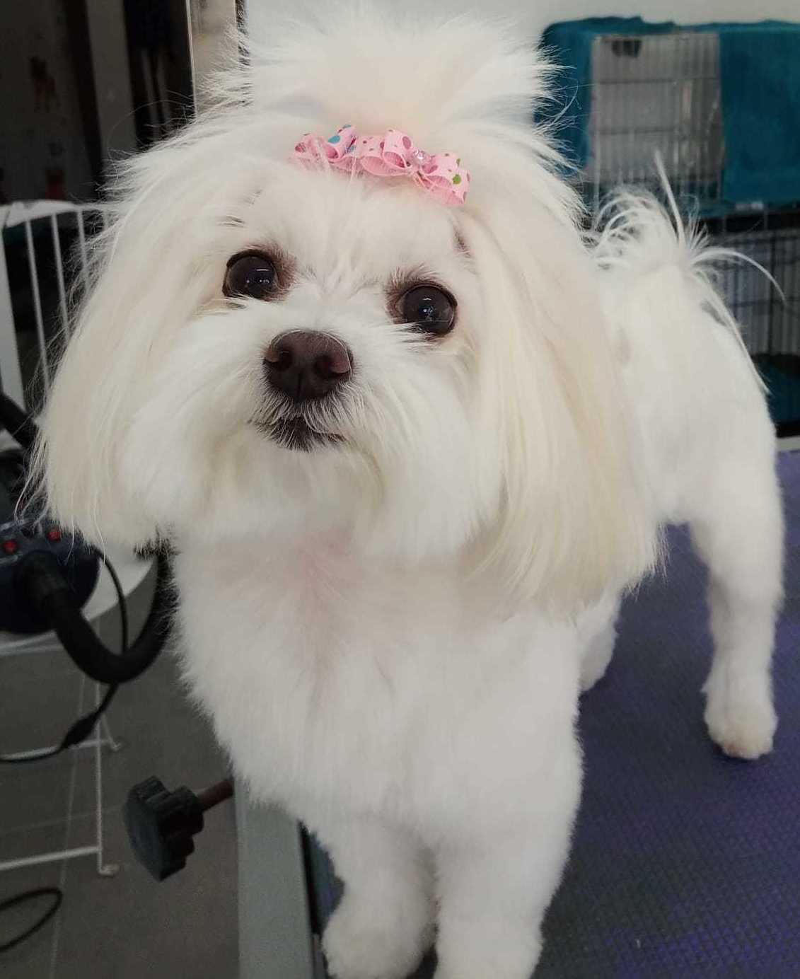 Foto 9 de Tiendas de animales en  | Happy Mascotas Aguadulce