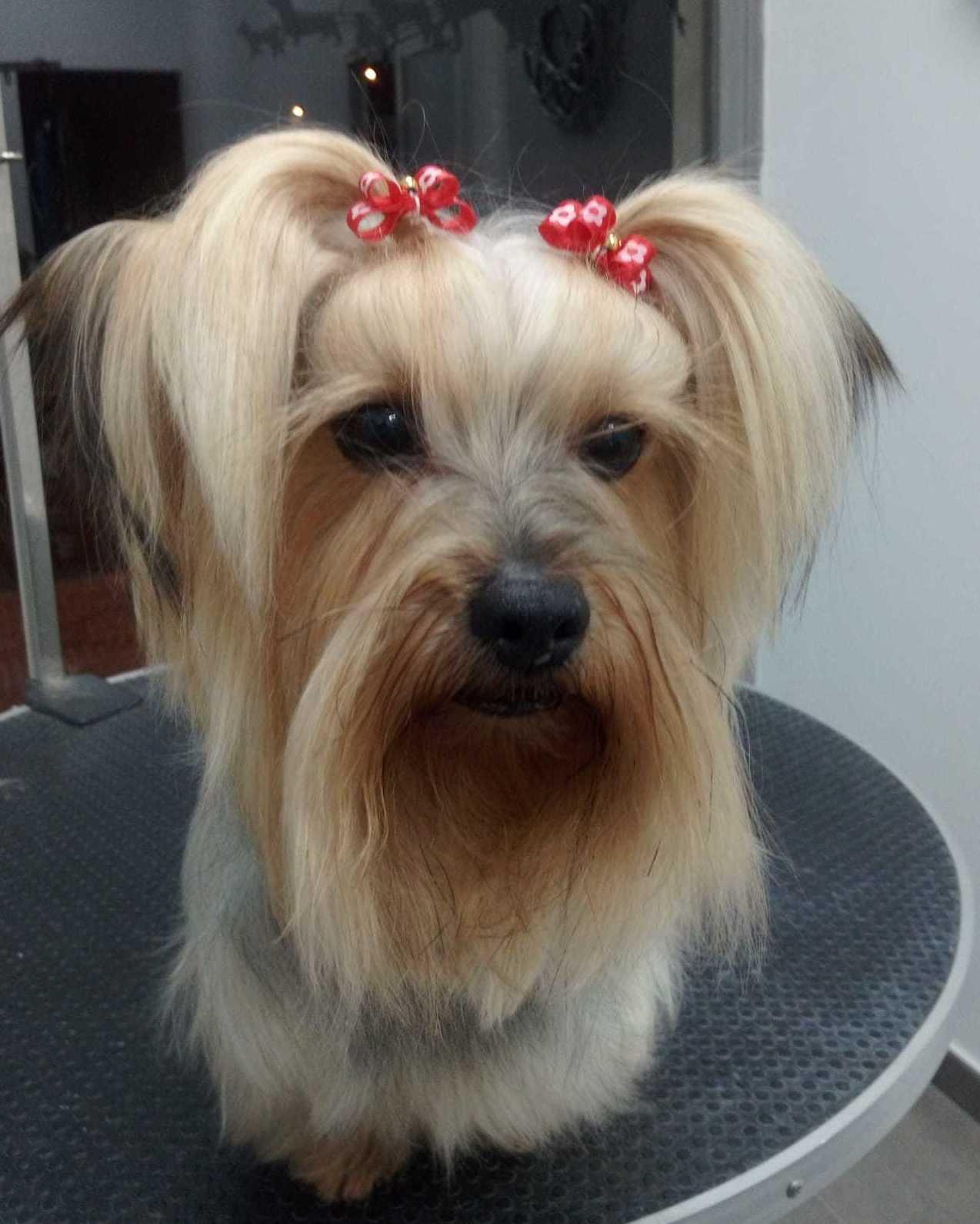 Foto 30 de Tiendas de animales en  | Happy Mascotas Aguadulce