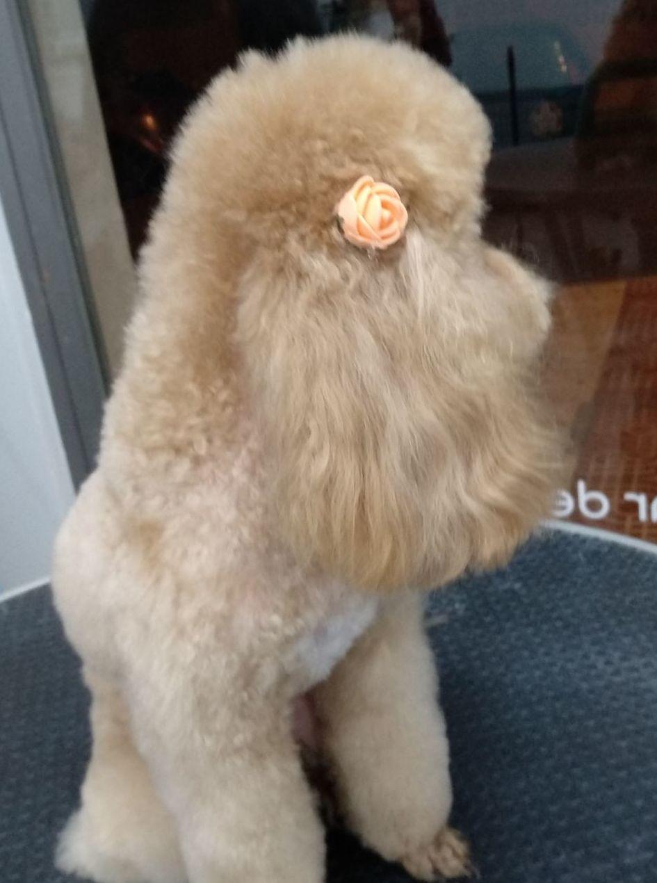 Foto 32 de Tiendas de animales en  | Happy Mascotas Aguadulce