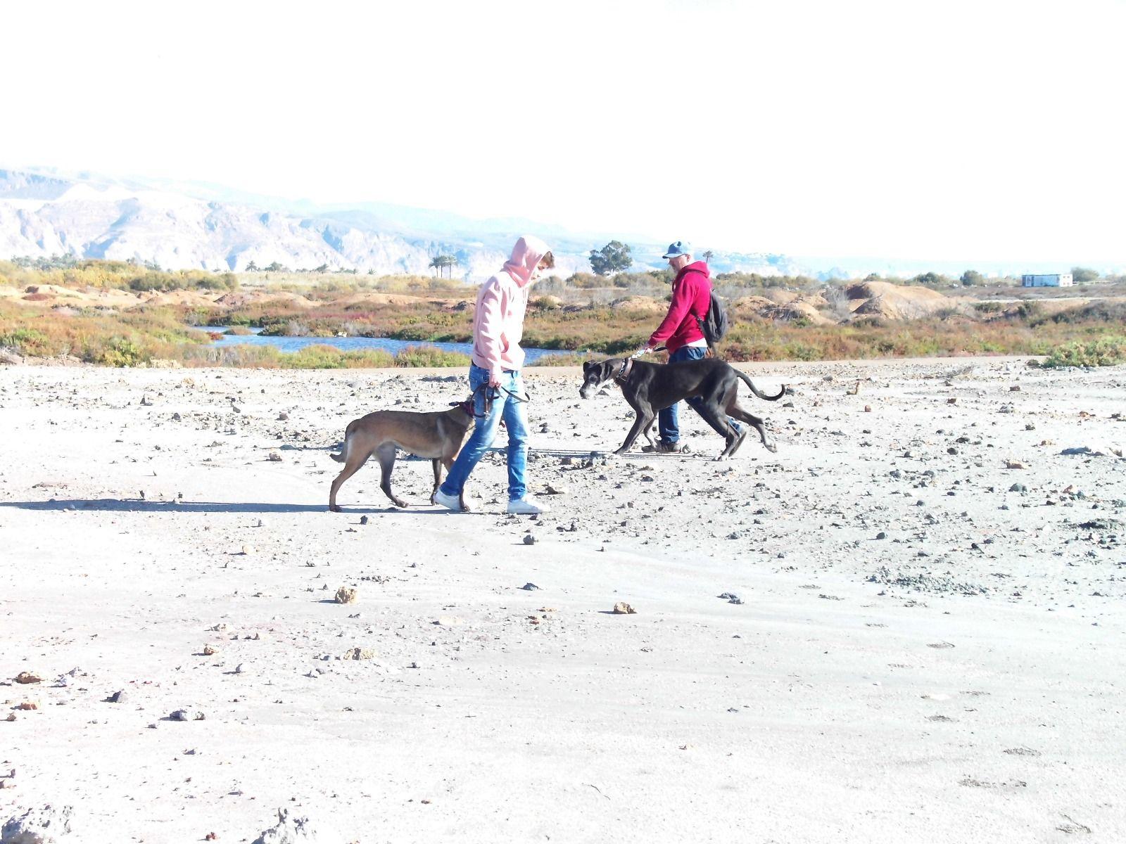 Adiestramiento de perros en Aguadulce