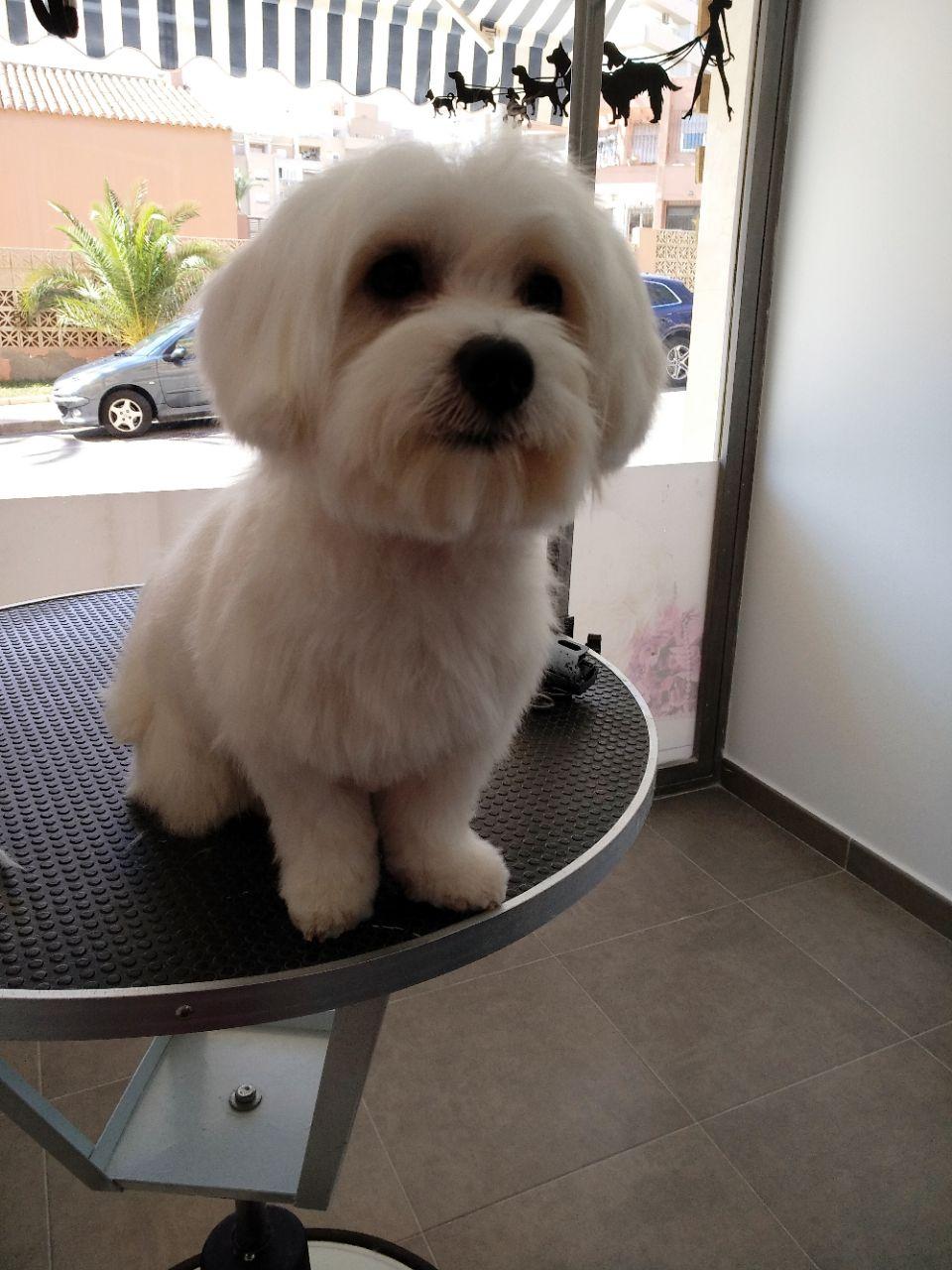 Foto 48 de Tiendas de animales en  | Happy Mascotas Aguadulce