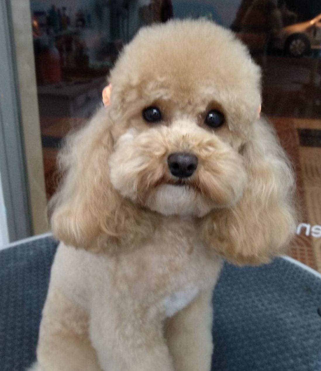Foto 33 de Tiendas de animales en  | Happy Mascotas Aguadulce