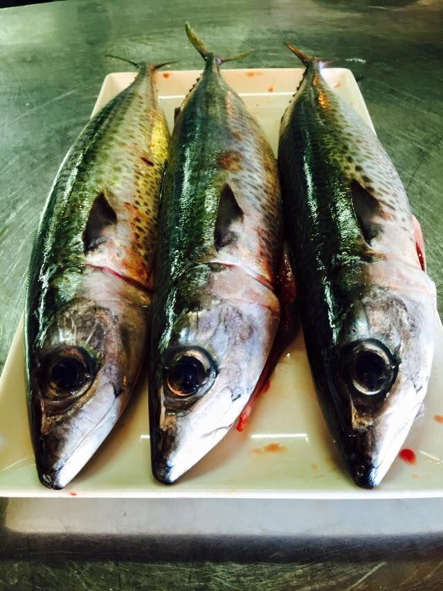 Nuestro pescado, siempre frescos