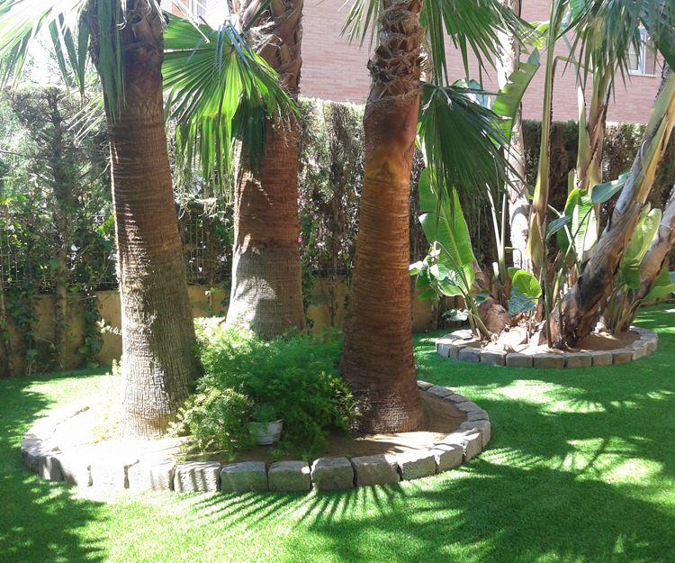 Poda y conservación de palmeras