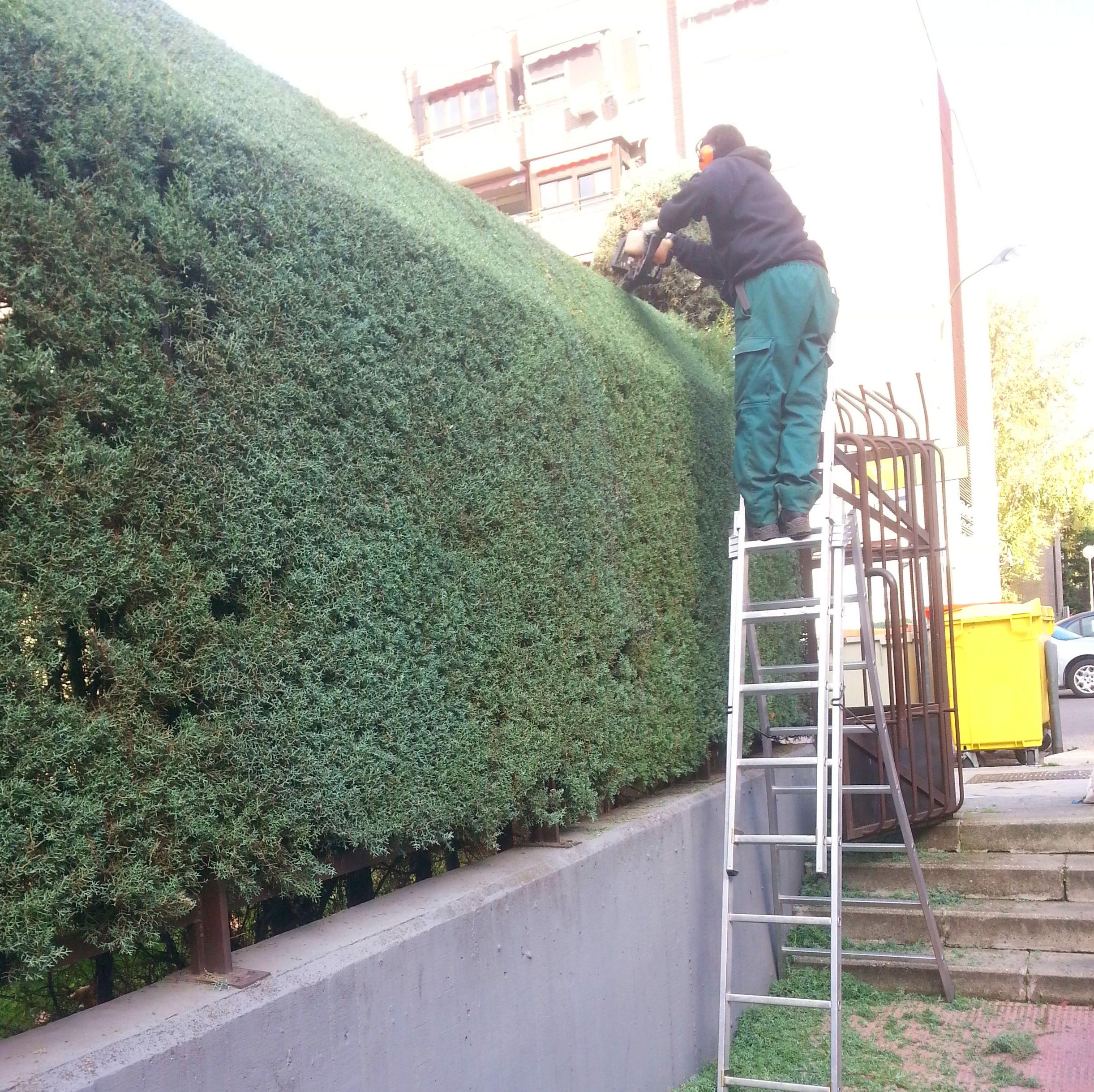 Mantenimientos servicios de plantea jardiner a y paisajismo for Servicios de jardineria y paisajismo