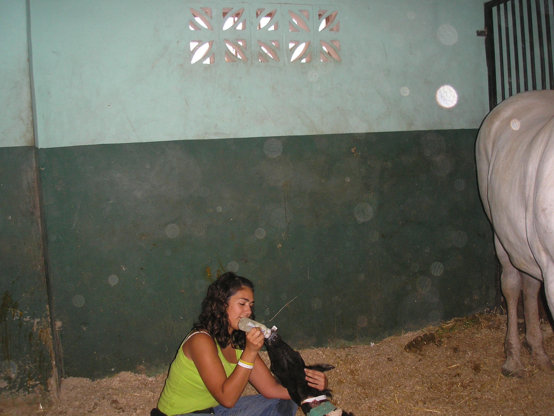 Foto 36 de Veterinarios en El Barraco | Centro Veterinario Iruelas