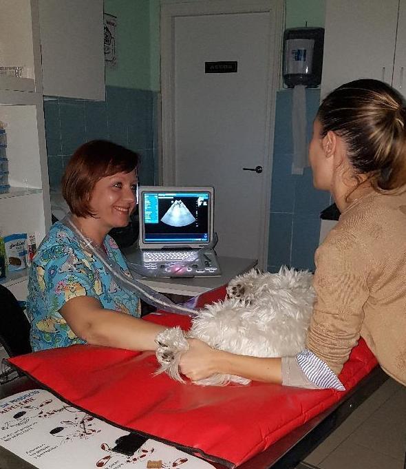 Foto 4 de Veterinarios en Torrejón de Ardoz | Centro Veterinario Confivet