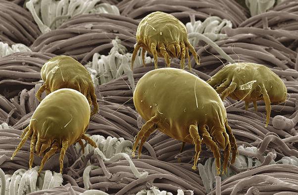 Consejos para evitar la alergia a los ácaros