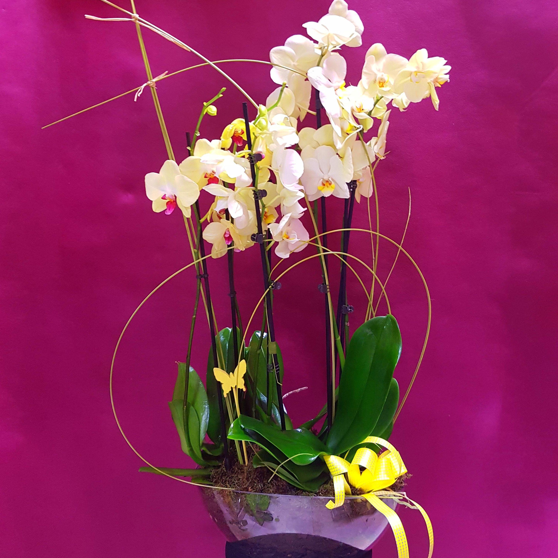 Centro de orquídeas