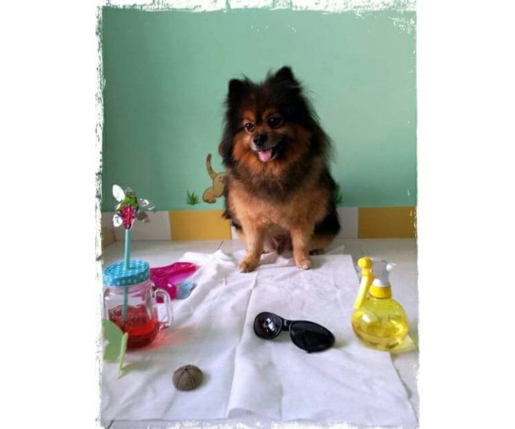 Tu mascota siempre guapo con nuestra peluquería canina