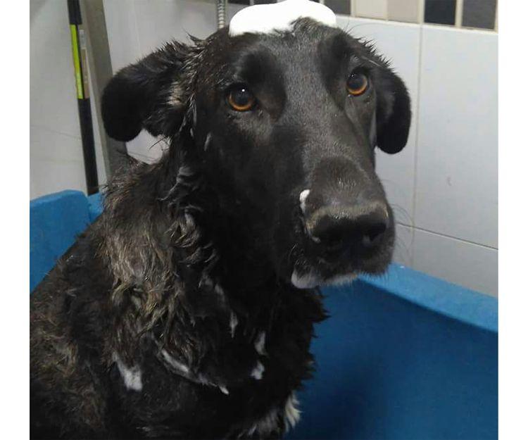 Disfruta de un baño en nuestra peluquería canina