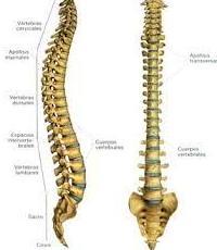 Osteopatia y reflexologia