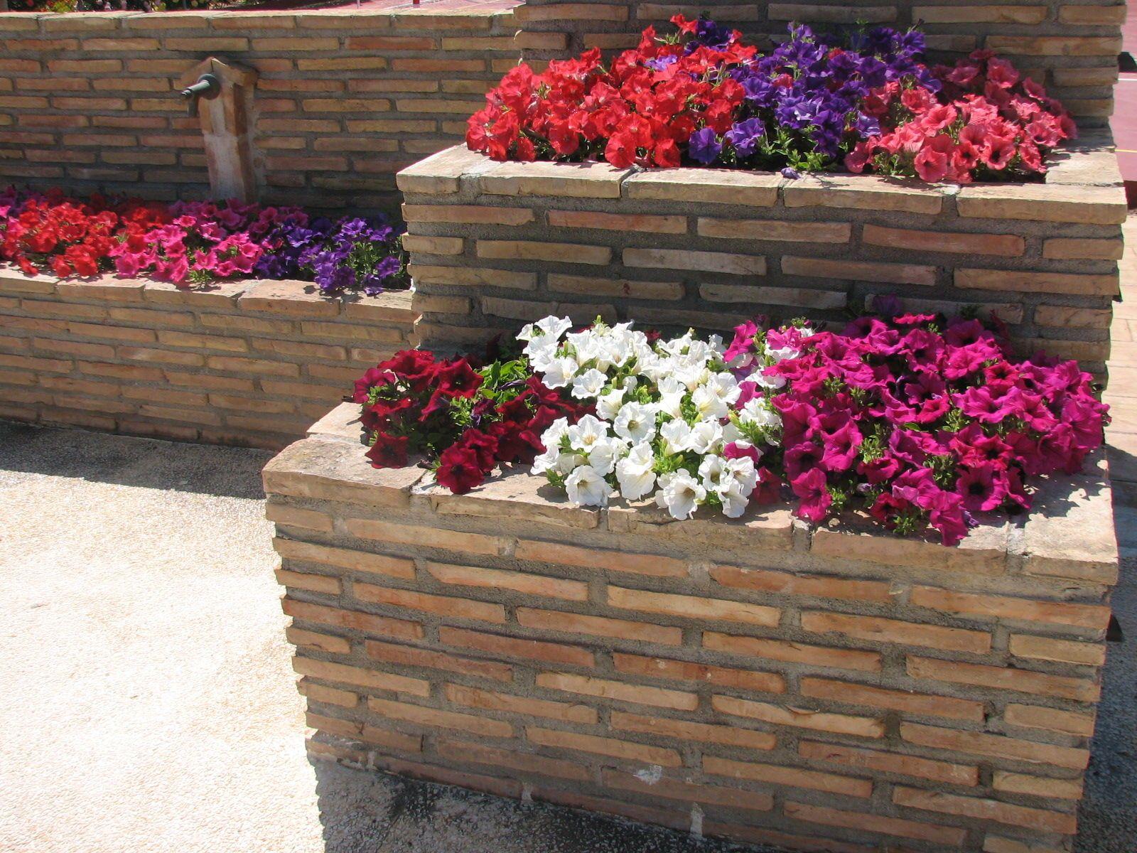 Jardinería Alicante