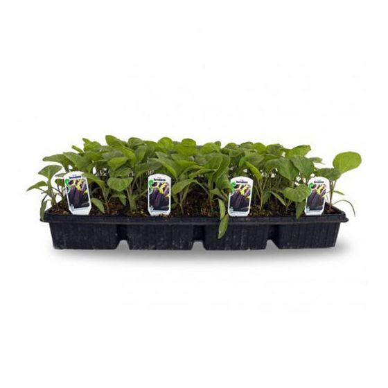 Huerto urbano: Productos de Garden La Palma