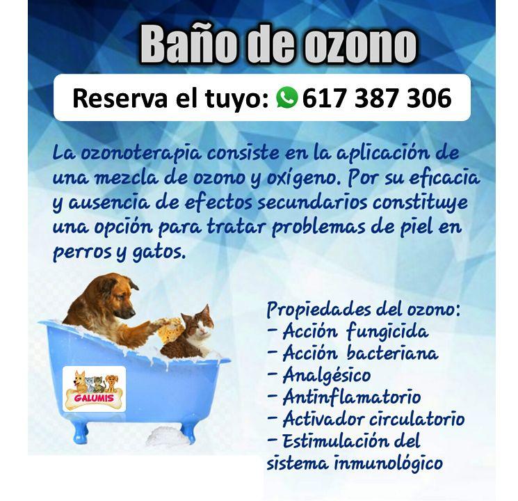Tratamiento de Ozonoterapia para mascotas: Perros y gatos de Galumis