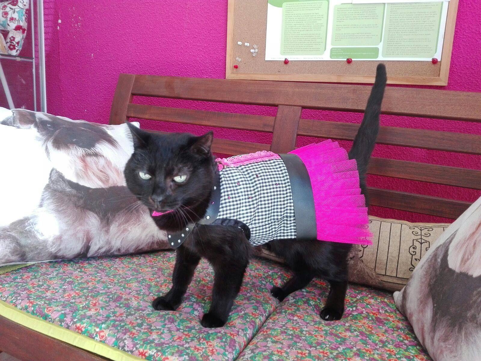 Moda para gatos