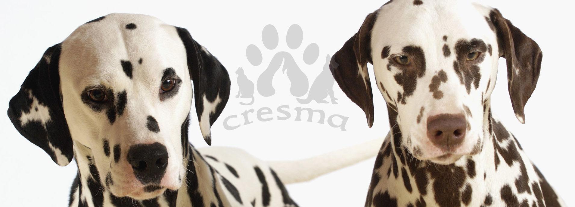 Tanatorio y crematorio para mascotas