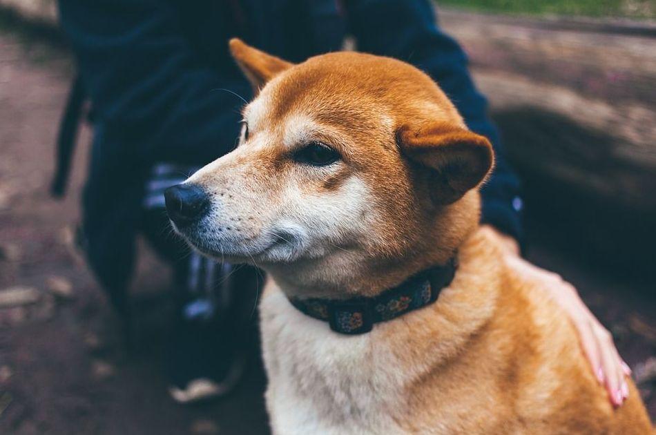 Collar para monitorizar a tu mascota