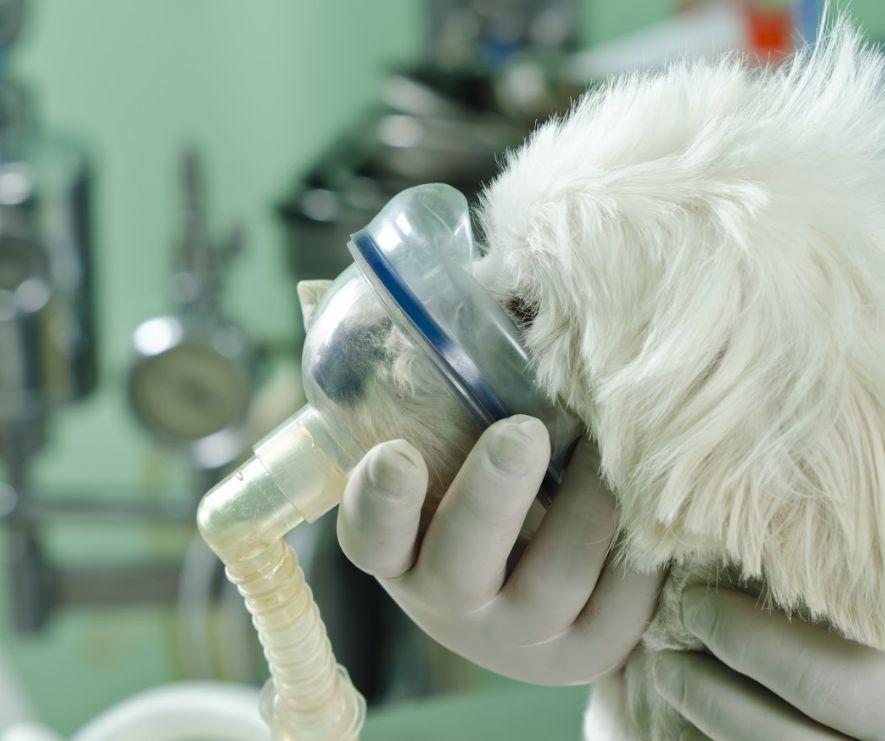 Cirugía general: Especialidades y Servicios de Clínica Veterinaria Ferofu