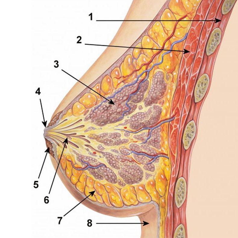 Tratamientos corporales:  de Imsei Clinic Medicina Estética