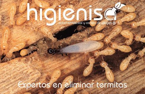 Eliminar termitas tratamientos