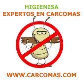 Expertos en eliminar carcomas tratamientos carcoma