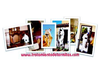 Tratamientos contra termitas y carcomas Alicante