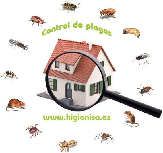 Control de plagas alicante