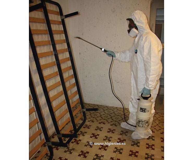 Especialistas en eliminación de chinches en Alicante
