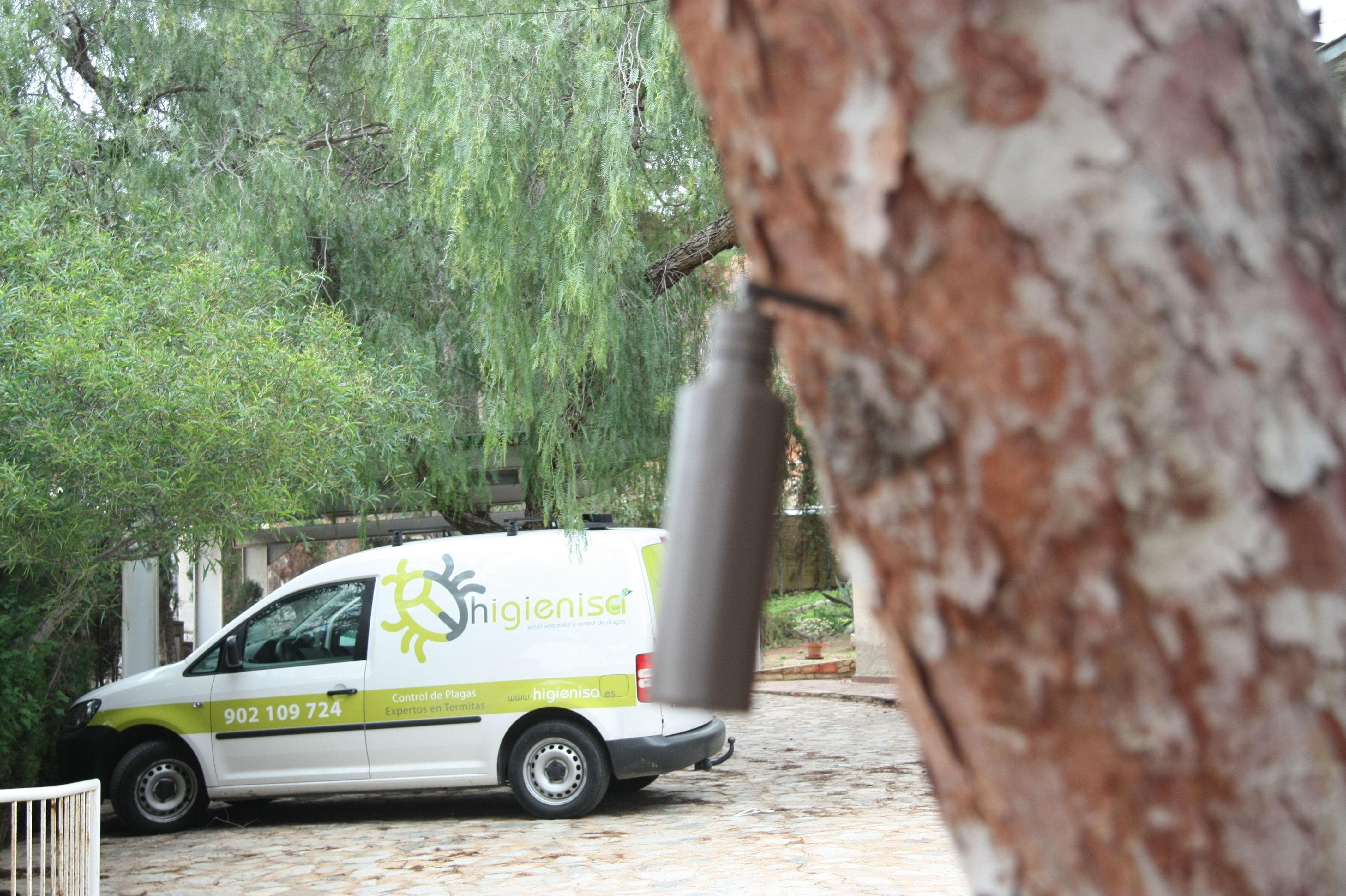 Tratamiento para eliminar procesionaria del pino