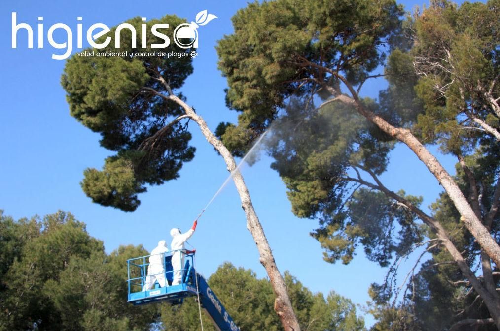 Fumigar pinos para eliminar procesionaria del pino