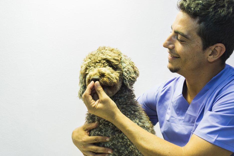 Veterinarios especialistas en dermatología en Tenerife