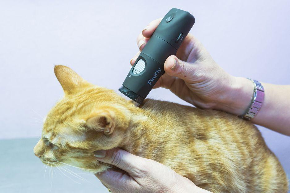 Alergias en gatos en Santa Cruz de Tenerife