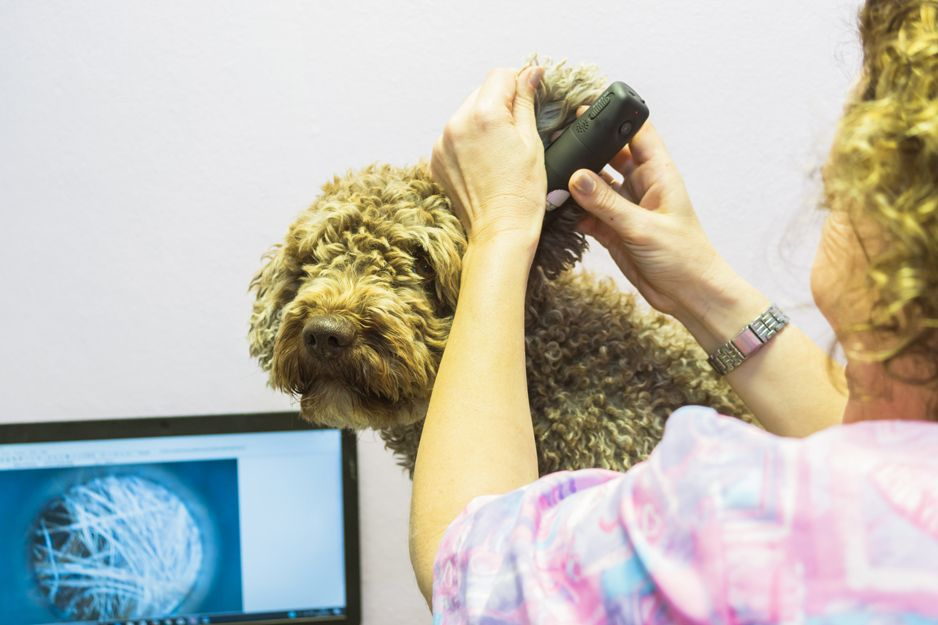 Alergias en mascotas en Tenerife