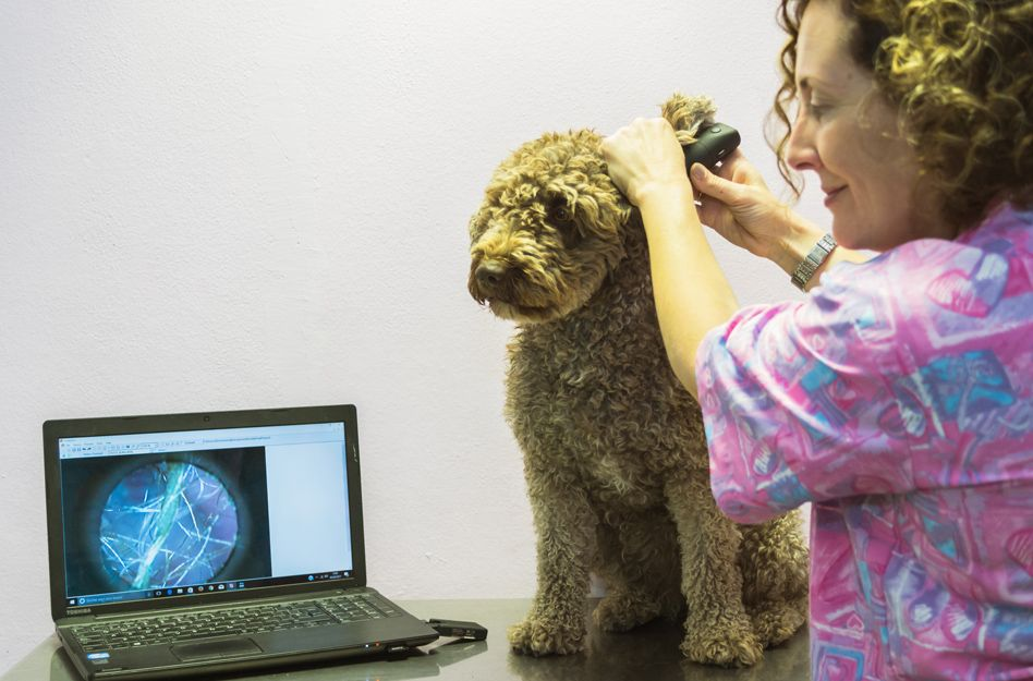 Dermivet Tenerife, veterinarios especializados en dermatología