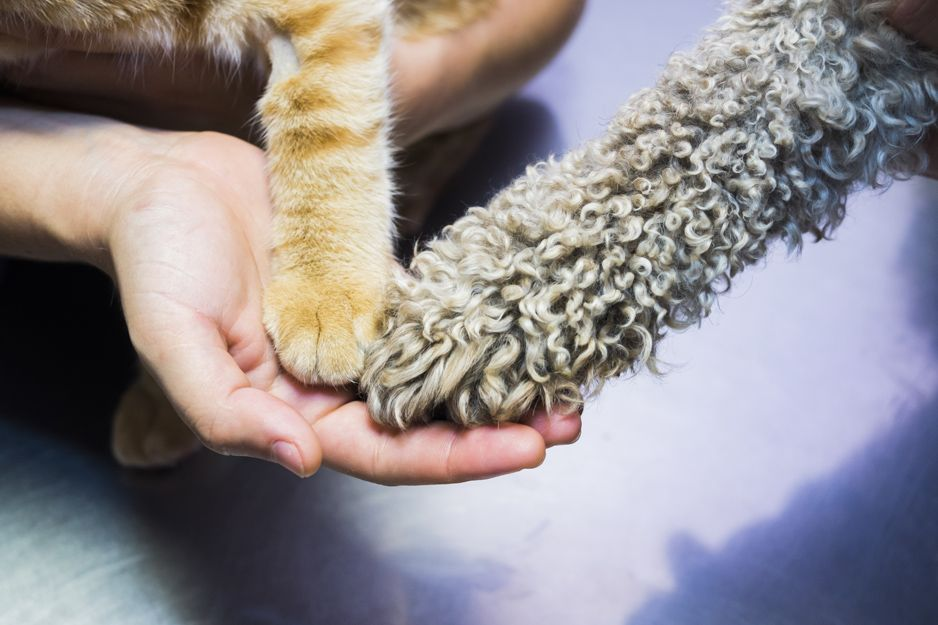 Tratamiento de alergias en mascotas en Tenerife