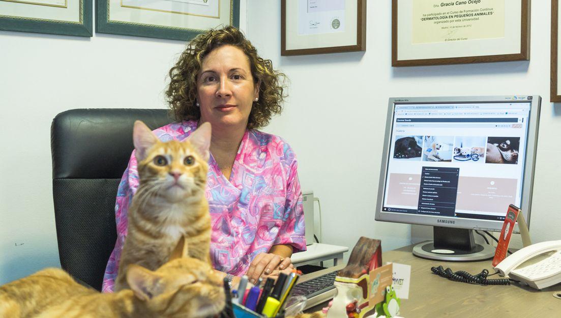 Dermatólogo veterinario en Santa Cruz de Tenerife