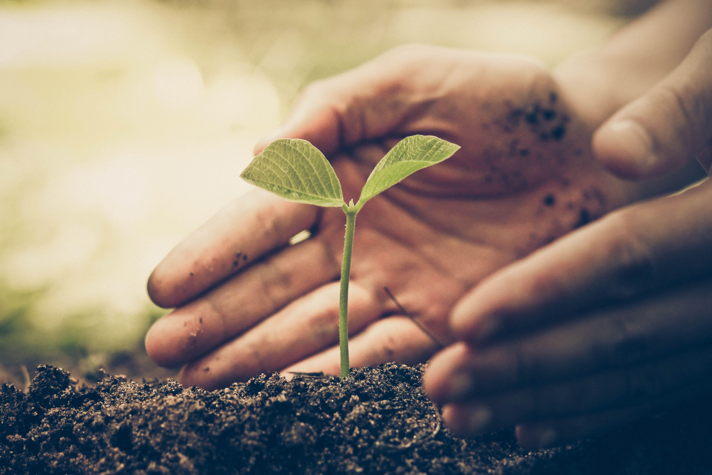 Venta de Semillas: Productos y Servicios de Vargas Integral