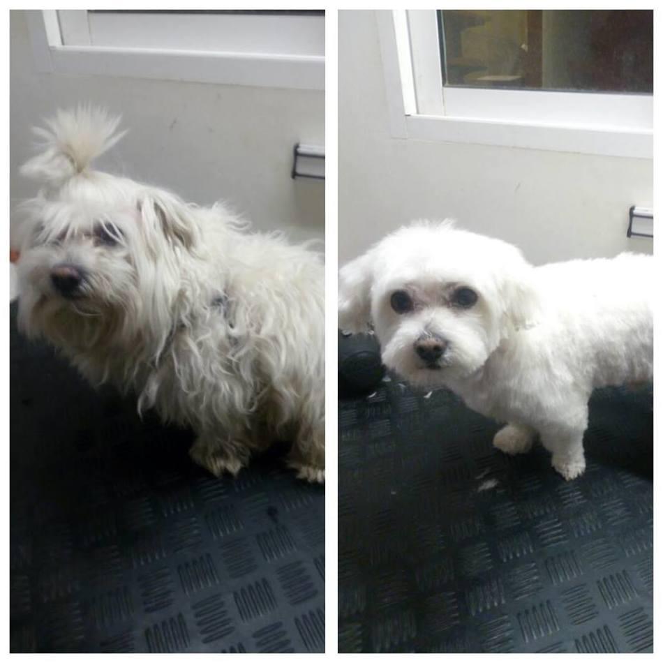 Antes y después de Pelayo