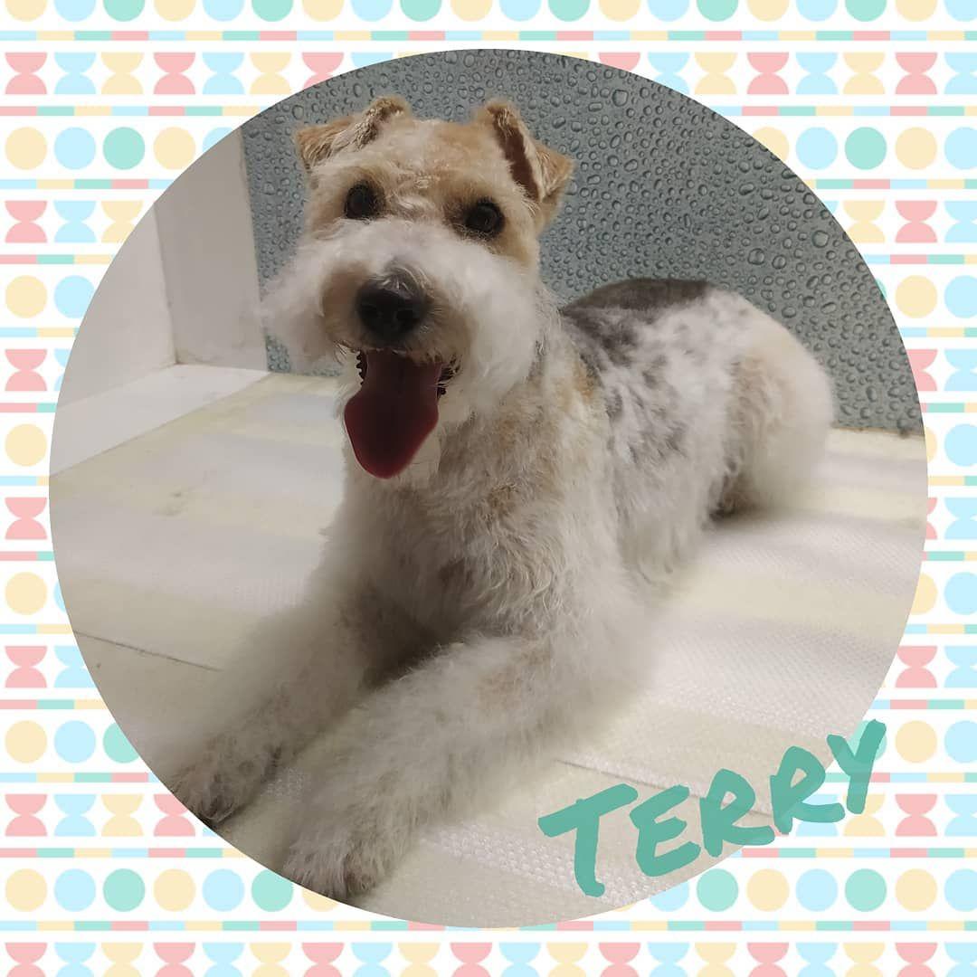 Terry, una preciosa Fox
