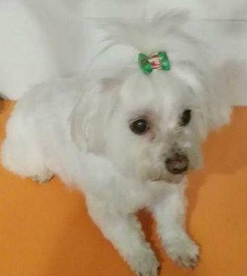 Coleteros para perros Burgos