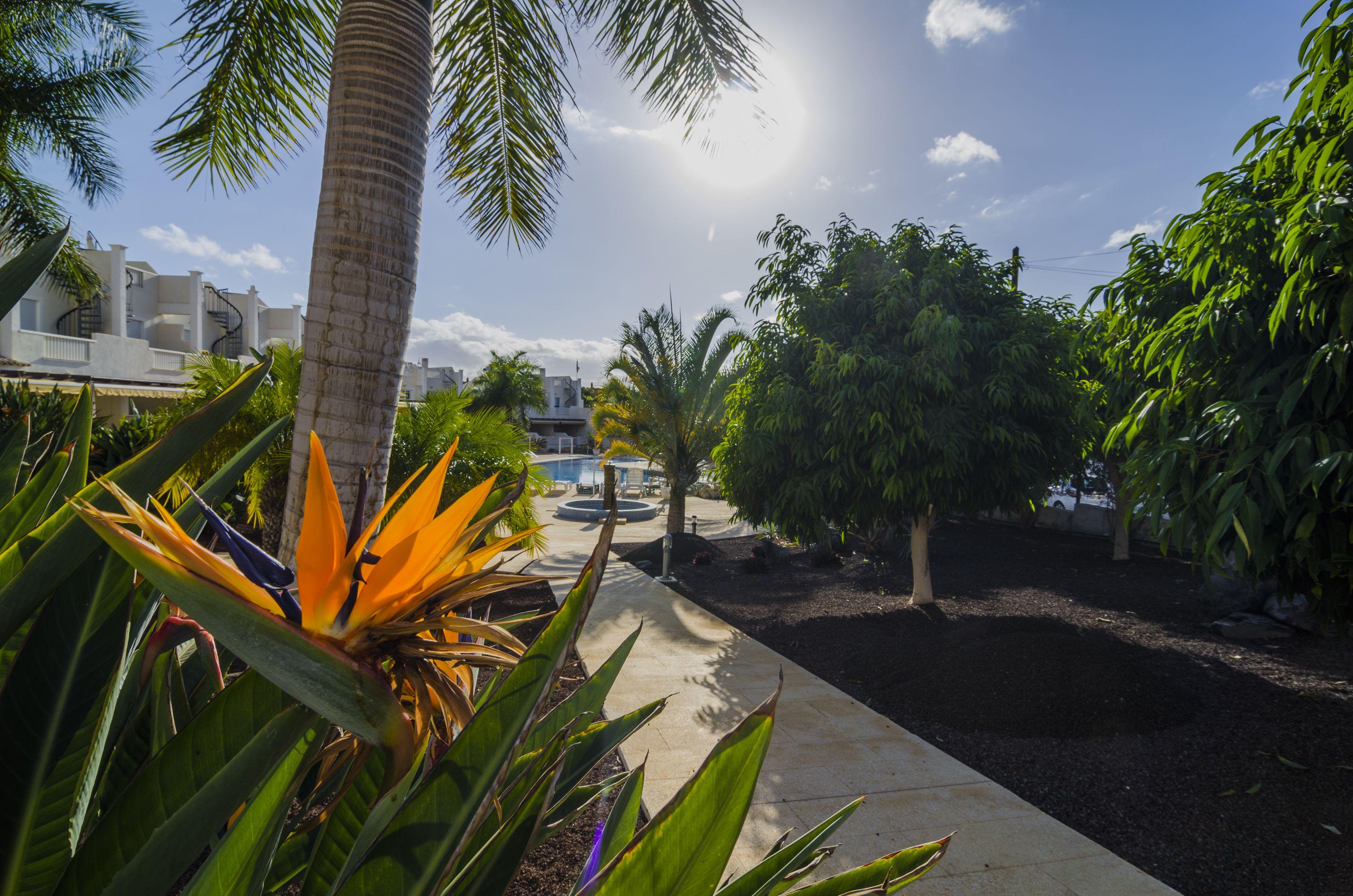 Paisajismo en Santa Cruz de Tenerife