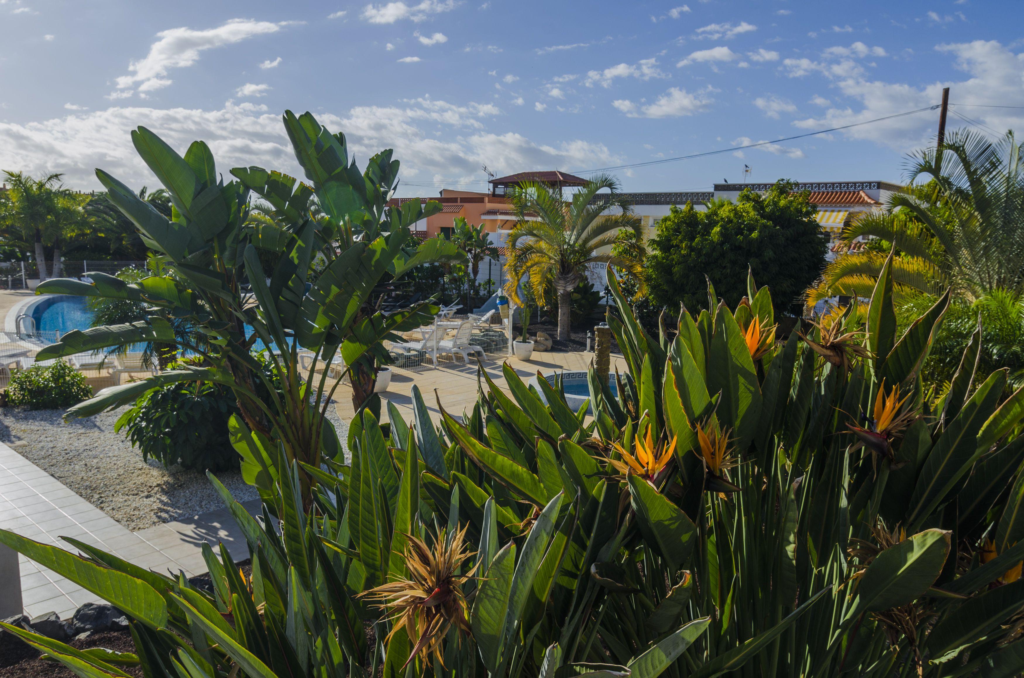 Foto 15 de paisajismo y jardiner a en santa cruz de tenerife echium - Jardineros tenerife ...