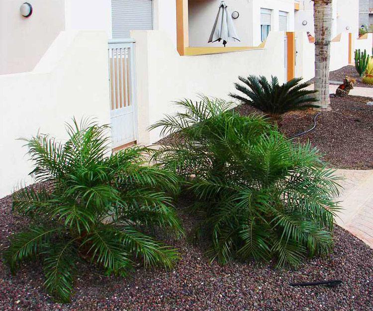 Proyectos de modernización de jardines en Santa Cruz de Tenerife