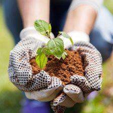 Explotaciones agrarias: Servicios de Echium