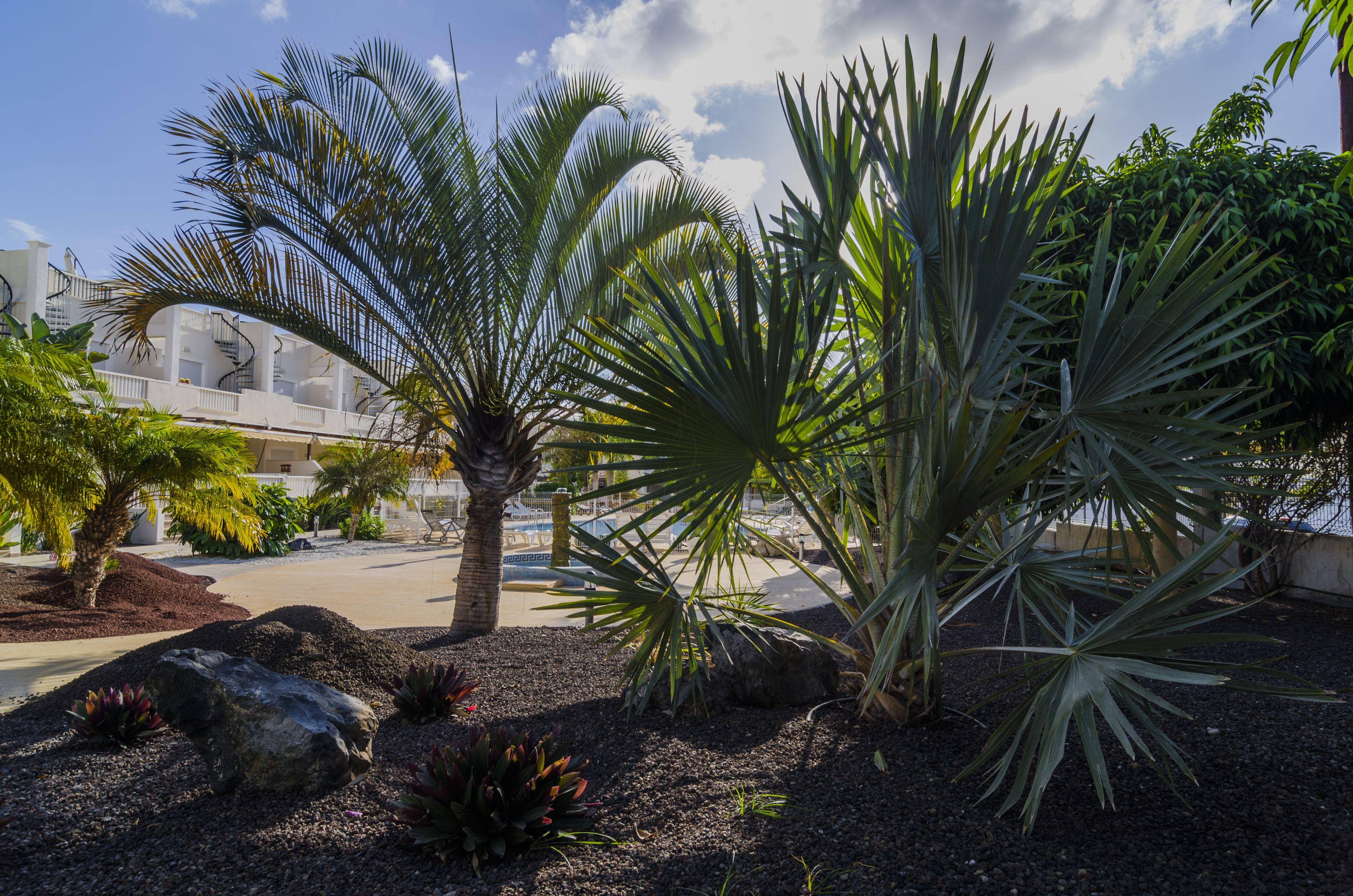 Modernización de jardines en Santa Cruz de Tenerife