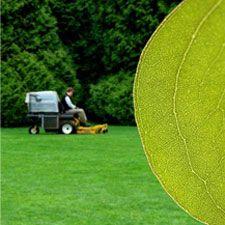 Plantación de césped: Servicios de Echium