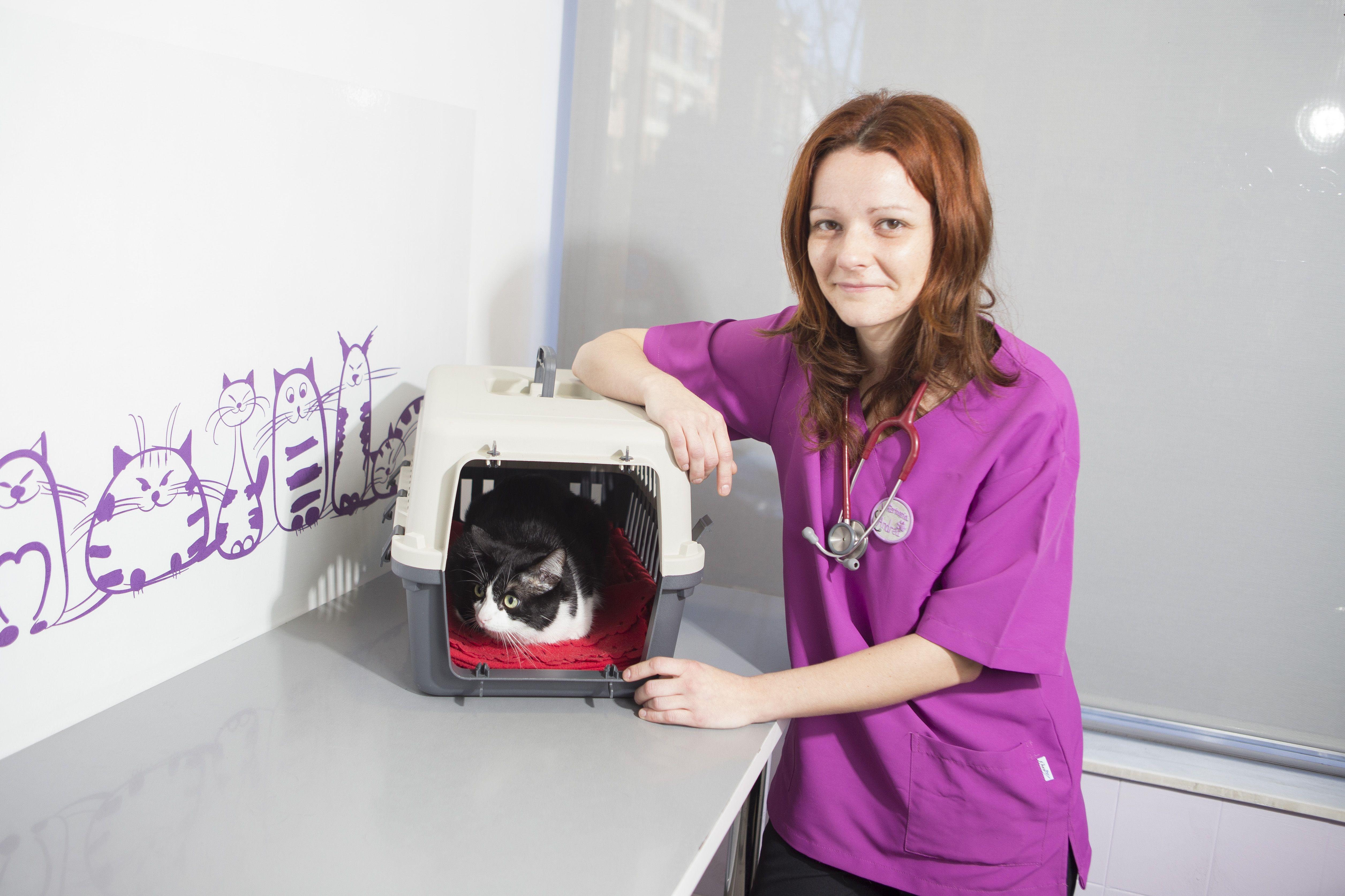 Limpieza dental veterinaria en Oviedo